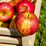 Czy przechowywanie jabłek przez zimę jest trudne?